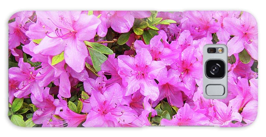 Office Galaxy S8 Case featuring the photograph Office Art Azaleas Flower Art Prints 1 Azalea Flowers Giclee Baslee Troutman by Baslee Troutman