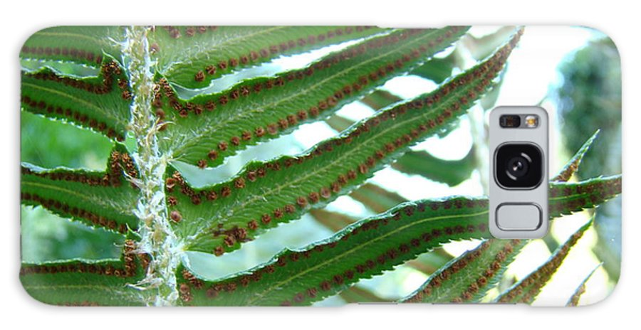 Fern Galaxy S8 Case featuring the photograph Office Art Ferns Green Forest Fern Giclee Prints Baslee Troutman by Baslee Troutman