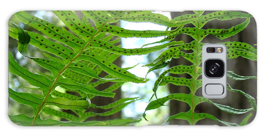 Fern Galaxy S8 Case featuring the photograph Office Art Ferns Redwood Forest Fern Giclee Prints Baslee Troutman by Baslee Troutman