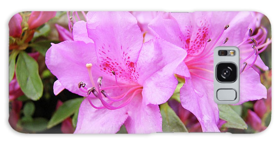 Flower Galaxy S8 Case featuring the photograph Office Art Pink Azalea Flower Garden 3 Giclee Art Prints Baslee Troutman by Baslee Troutman