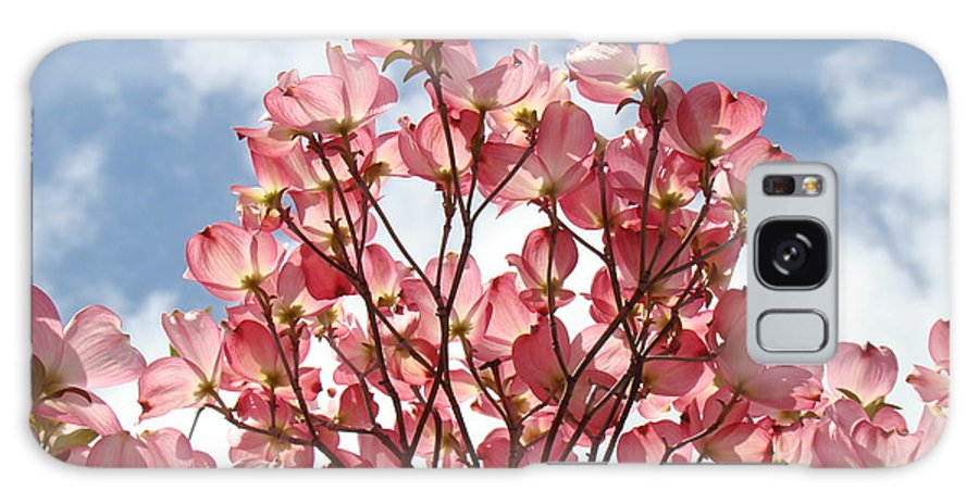 Office Galaxy S8 Case featuring the photograph Office Art Prints Blue Sky Pink Dogwood Flowering 7 Giclee Prints Baslee Troutman by Baslee Troutman