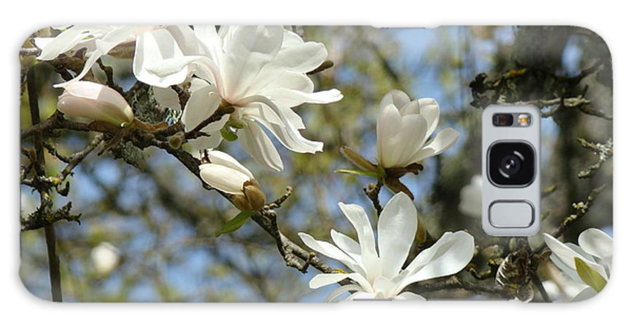 Magnolia Galaxy S8 Case featuring the photograph Office Art Prints Magnolia Tree Flowers Landscape 15 Giclee Prints Baslee Troutman by Baslee Troutman