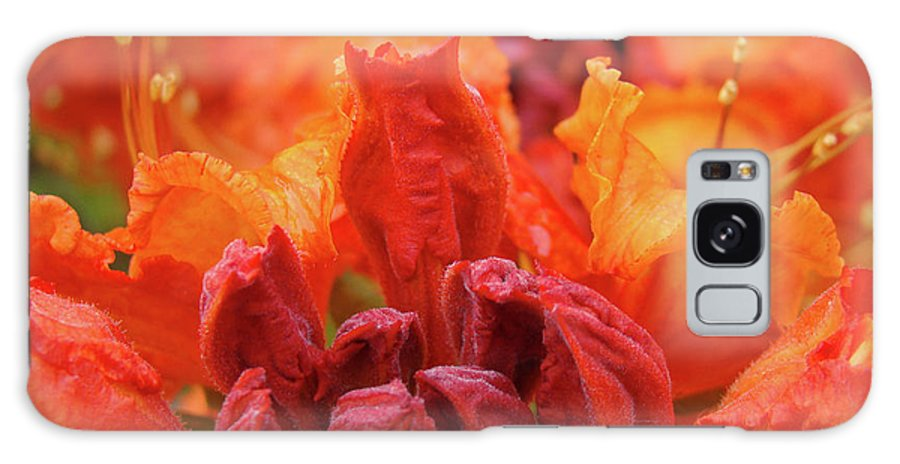 �azaleas Artwork� Galaxy S8 Case featuring the photograph Office Art Prints Orange Azaleas Flowers 9 Giclee Prints Baslee Troutman by Baslee Troutman