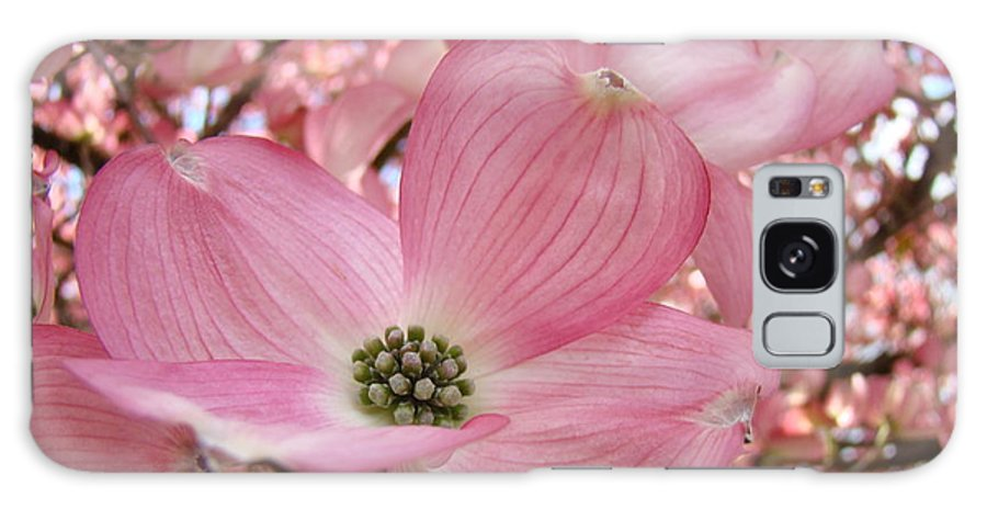 Dogwood Galaxy S8 Case featuring the photograph Office Art Prints Pink Flowering Dogwood Tree 1 Giclee Prints Baslee Troutman by Baslee Troutman