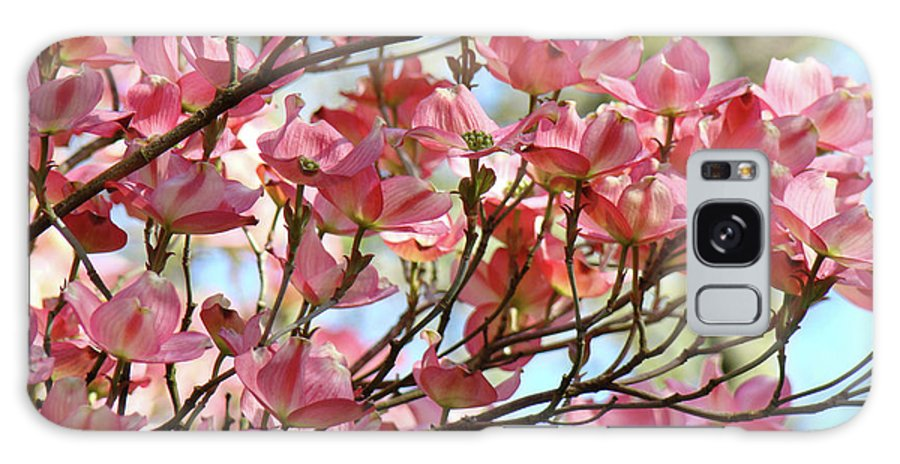 Dogwood Galaxy S8 Case featuring the photograph Office Art Prints Pink Flowering Dogwood Trees 18 Giclee Prints Baslee Troutman by Baslee Troutman