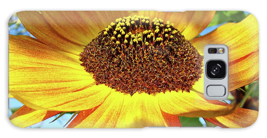 Sunflower Galaxy S8 Case featuring the photograph Office Art Prints Sunflowers Giclee Prints Sun Flower Baslee Troutman by Baslee Troutman
