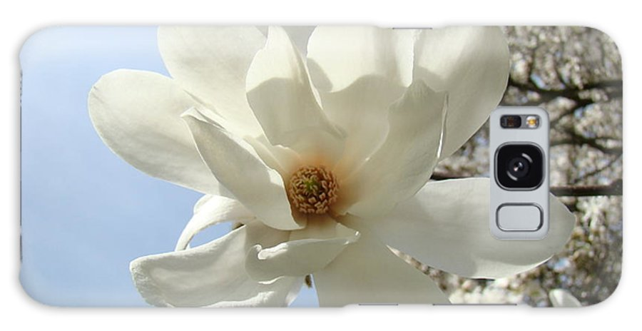 Magnolia Galaxy S8 Case featuring the photograph Office Art Prints White Magnolia Flower 66 Blue Sky Giclee Prints Baslee Troutman by Baslee Troutman