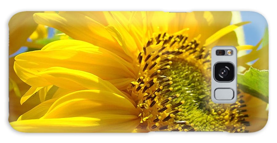 Sunflower Galaxy S8 Case featuring the photograph Office Art Sunflowers Giclee Art Prints Sun Flowers Baslee Troutman by Baslee Troutman