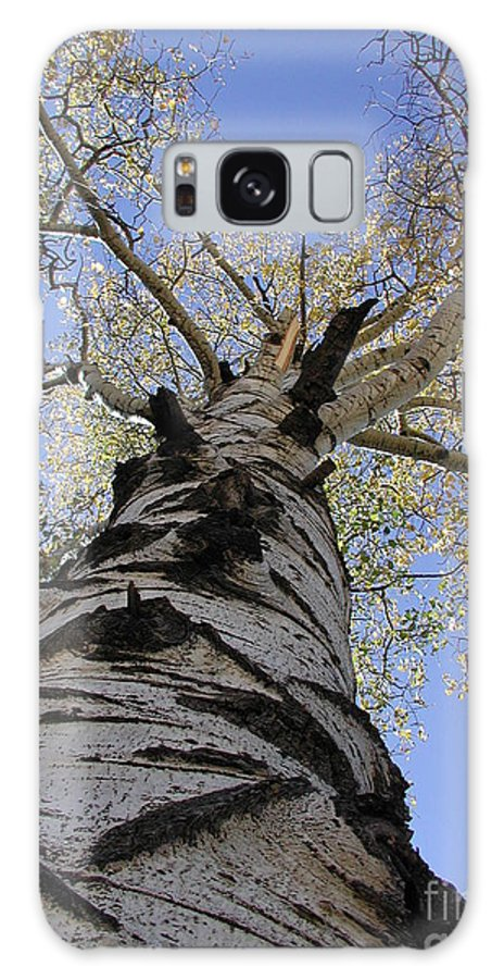 Old Tree's Galaxy S8 Case featuring the photograph Old Aspen by Chandelle Hazen