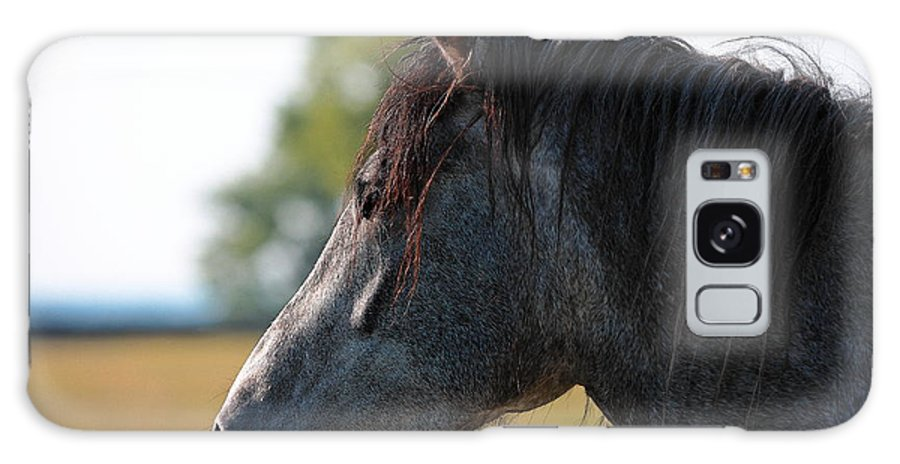 Horse Galaxy S8 Case featuring the photograph Old Gray Mare by Lone Dakota Photography