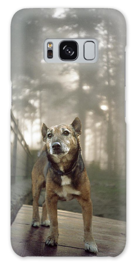 Dog Galaxy S8 Case featuring the photograph Old Mac by Rafa Rivas