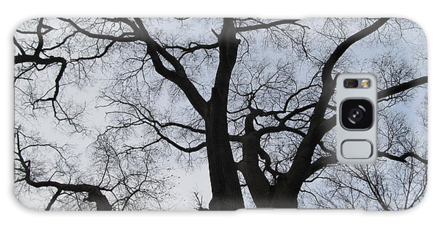 Winter Skyscape Overcast Old Oak Trees Oldgrowth Winter Oak Winter Trees Gray Sky Nature Prints Office Art Fine Art Forest Landscapes Treescapes Flora Galaxy S8 Case featuring the photograph Old Oak Overcast by Joshua Bales
