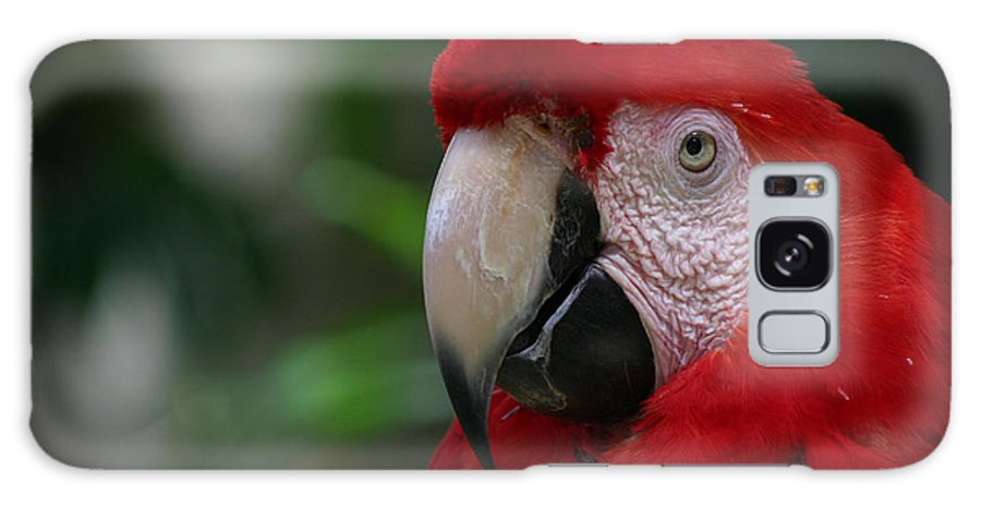 Bird Galaxy S8 Case featuring the photograph Old Red Parrot by Ruben Flanagan