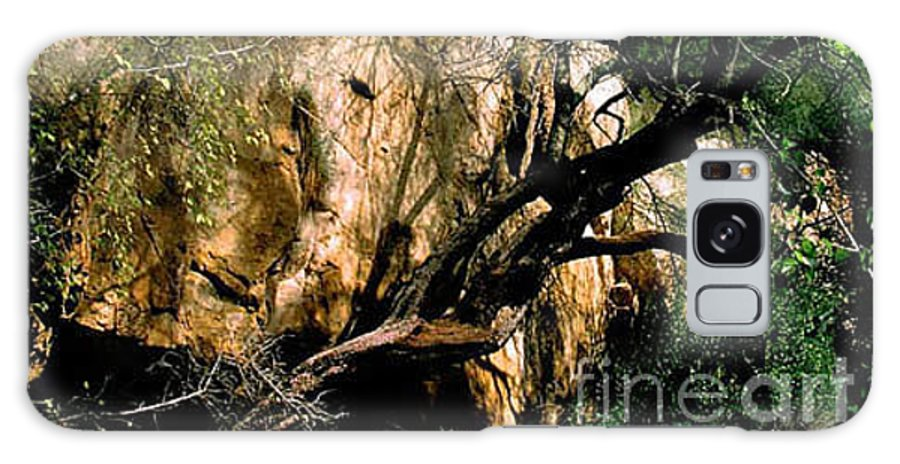 Trees Galaxy S8 Case featuring the photograph Old Tree by Kathy McClure