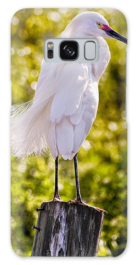 snowy Egret Galaxy Case featuring the photograph On Watch by Christopher Holmes
