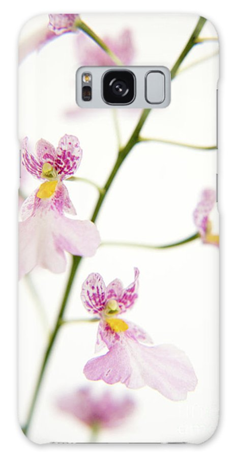Flowers Galaxy S8 Case featuring the painting Oncidium Orchid Flowers by Julia Hiebaum