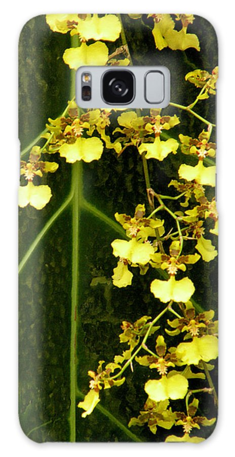 Orchids Galaxy S8 Case featuring the photograph Oncidium Orchids by Rosalie Scanlon