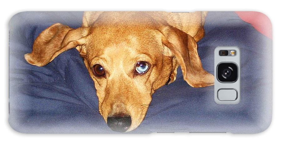 Dachshund Galaxy S8 Case featuring the photograph One Blue Eye by Nelson Strong