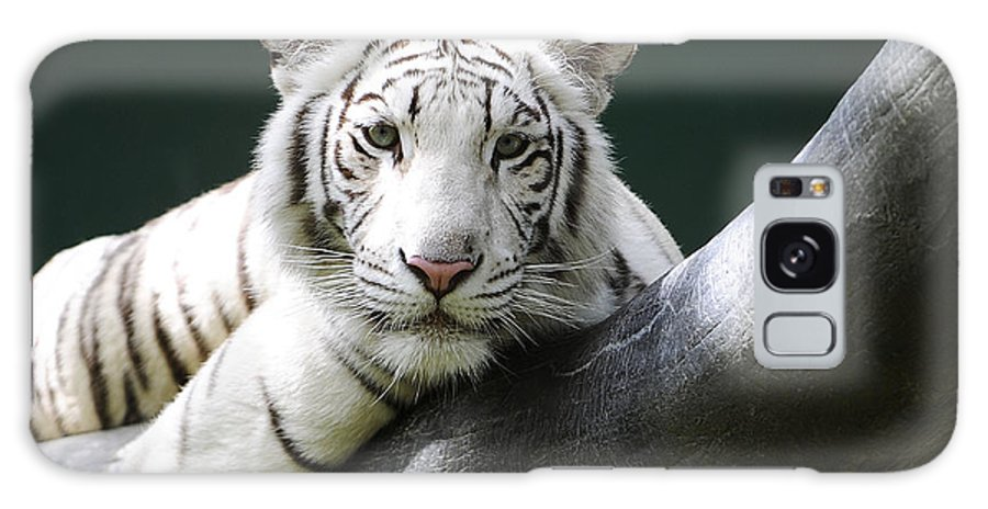 White Tiger Galaxy S8 Case featuring the photograph One Of Those Days by Keith Lovejoy