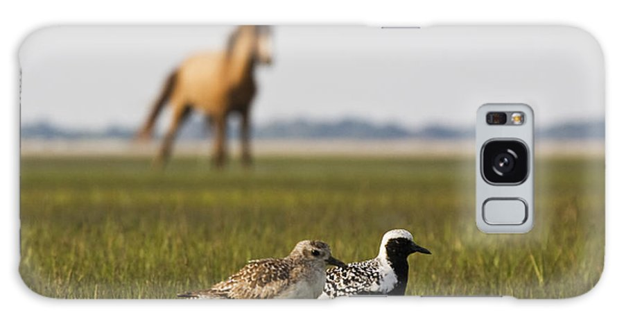 Black-bellied Plover Galaxy S8 Case featuring the photograph Onlooker by Bob Decker