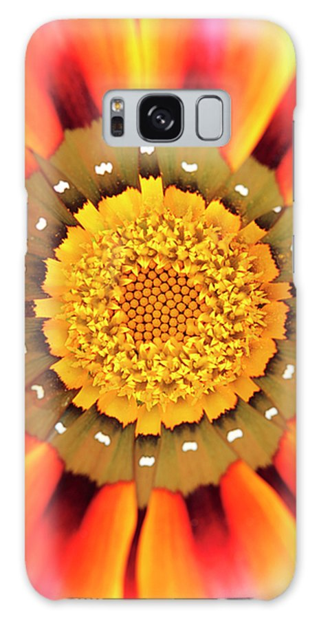 Gazania Galaxy S8 Case featuring the photograph Orange African Daisy by Neil Overy