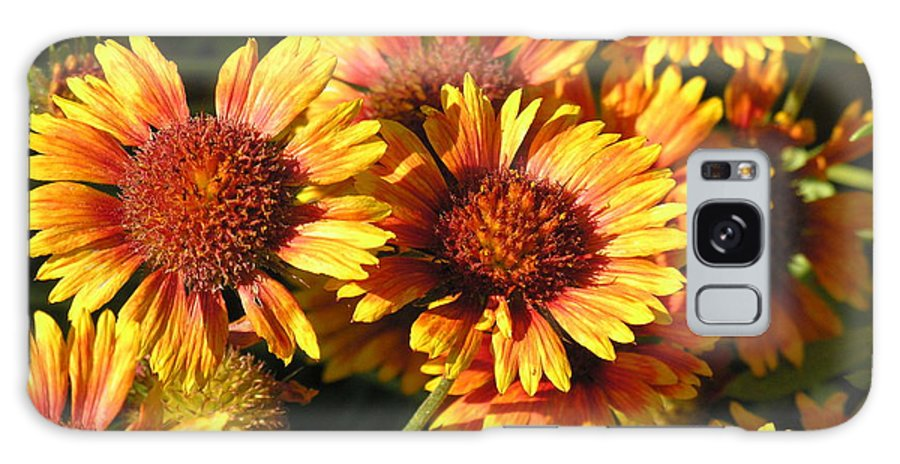 Orange Galaxy S8 Case featuring the photograph Orange And Gold by Diane Greco-Lesser