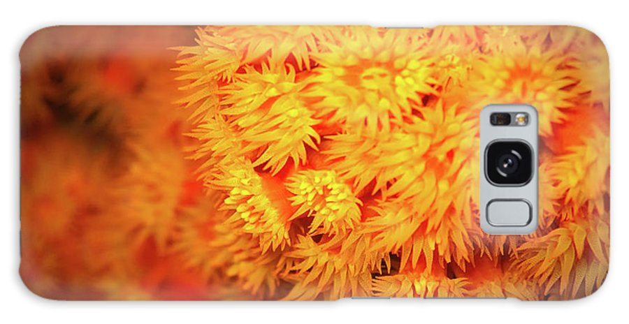Orange Anemones Galaxy S8 Case featuring the photograph Orange Anemones by Doug Sturgess