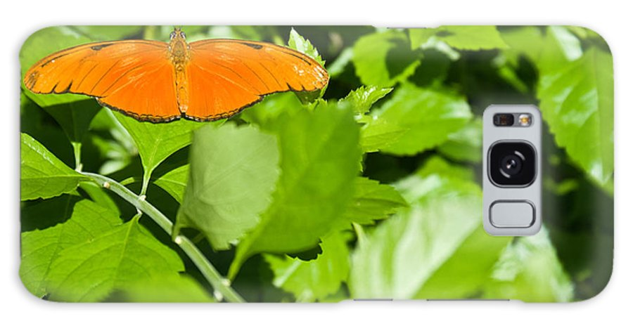 Orange Galaxy S8 Case featuring the photograph Orange Butterfly On Foliage by Douglas Barnett
