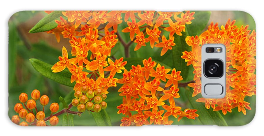Flower Galaxy S8 Case featuring the photograph Orange Butterfly Weed From Above by Anna Lisa Yoder