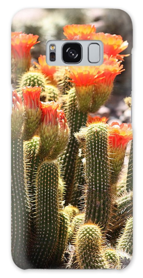 Orange Flowers Galaxy S8 Case featuring the photograph Orange Cactus Blooms by Carol Groenen