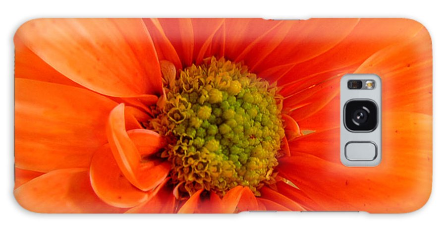 Nature Galaxy S8 Case featuring the photograph Orange Daisy - A Center View by Lucyna A M Green