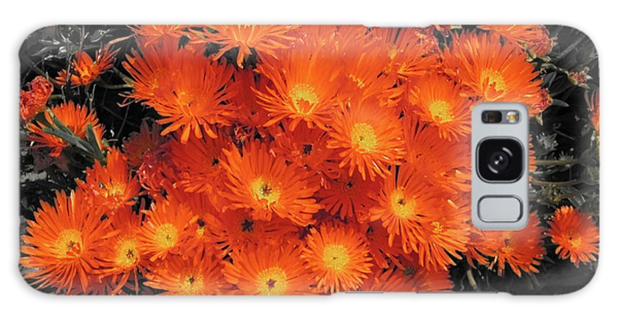 Flowers Galaxy S8 Case featuring the photograph Orange by Douglas Barnard