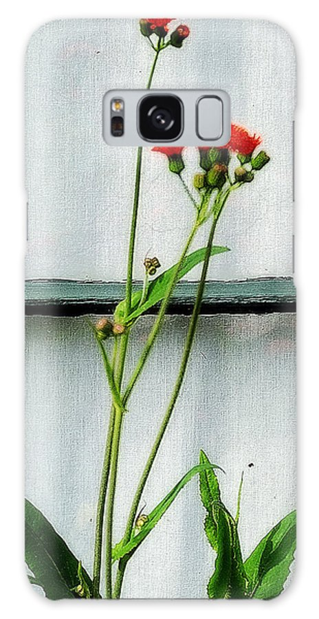 Flowers Galaxy S8 Case featuring the digital art Orange Hawkweed Over Gray Muslin by RC DeWinter