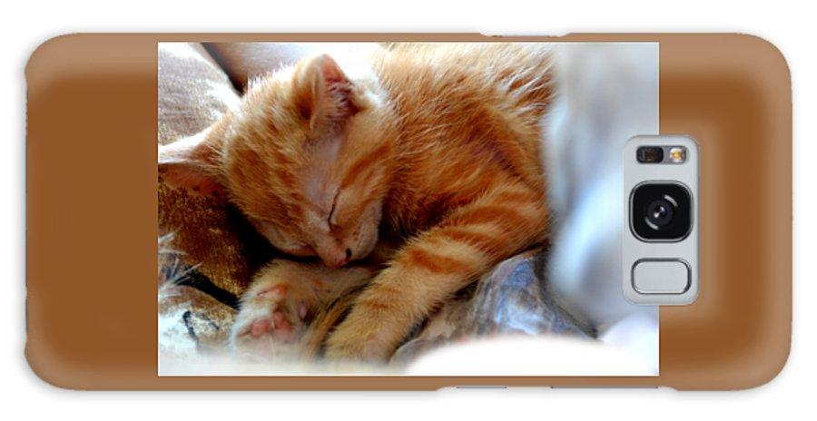 Kitten Galaxy S8 Case featuring the photograph Orange Kitten Sleeping In Silk And Satin by Reva Steenbergen