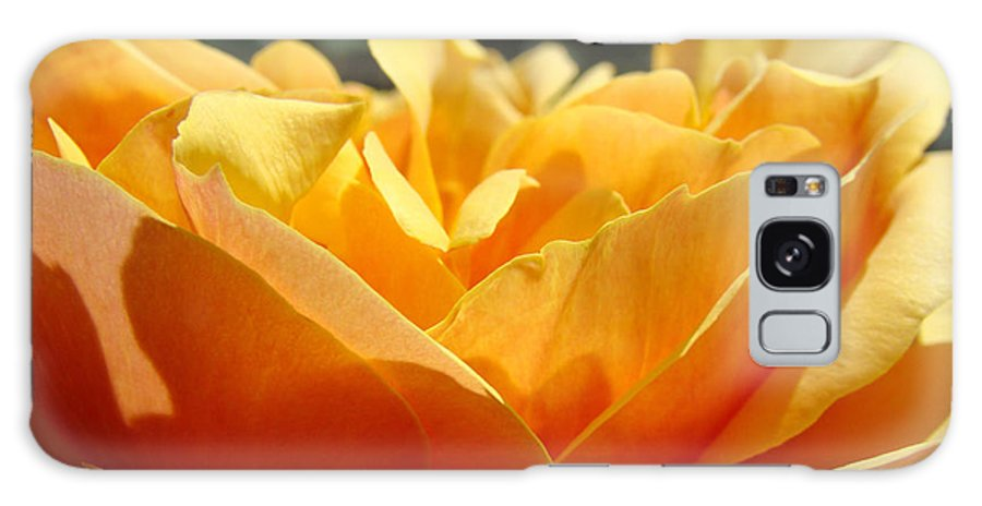 Rose Galaxy S8 Case featuring the photograph Orange Rose Art Prints Baslee Troutman by Baslee Troutman
