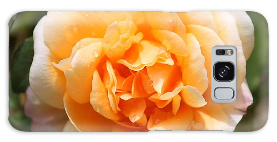 Orange Rose Galaxy S8 Case featuring the photograph Orange Rose Square by Carol Groenen