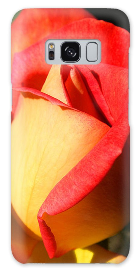 Orange Rosebud Galaxy S8 Case featuring the photograph Orange Rosebud by Ralph A Ledergerber-Photography