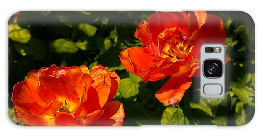'orange Tulips' Galaxy S8 Case featuring the photograph Orange Tulips In My Garden by Helmut Rottler
