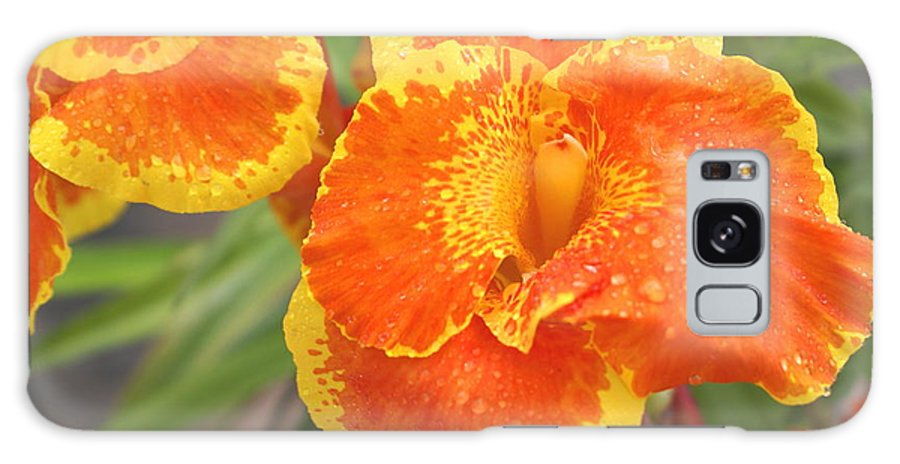 Glads Galaxy S8 Case featuring the photograph Orange Ya Glad by Debbie May