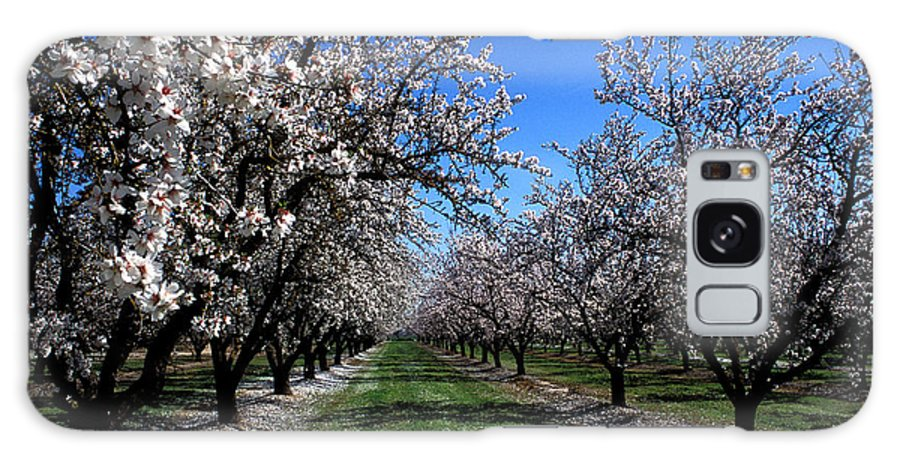 Trees Galaxy S8 Case featuring the photograph Orchard Trees Blossoming by Kathy Yates
