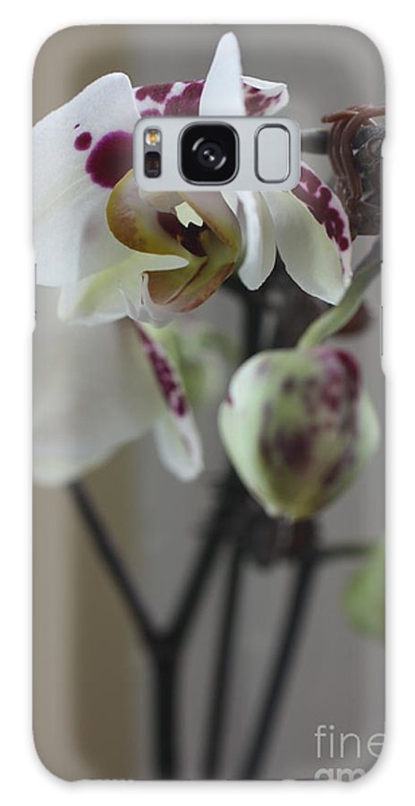 Orchid Galaxy S8 Case featuring the photograph Orchid - 100 by David Bearden