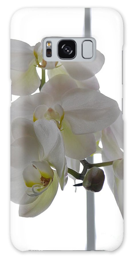 Orchid Galaxy S8 Case featuring the photograph Orchid - 101 by David Bearden