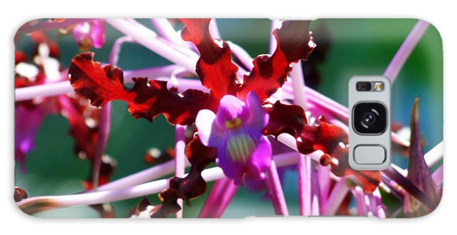 Orchids Galaxy S8 Case featuring the photograph Orchid Spider by Karen Wiles