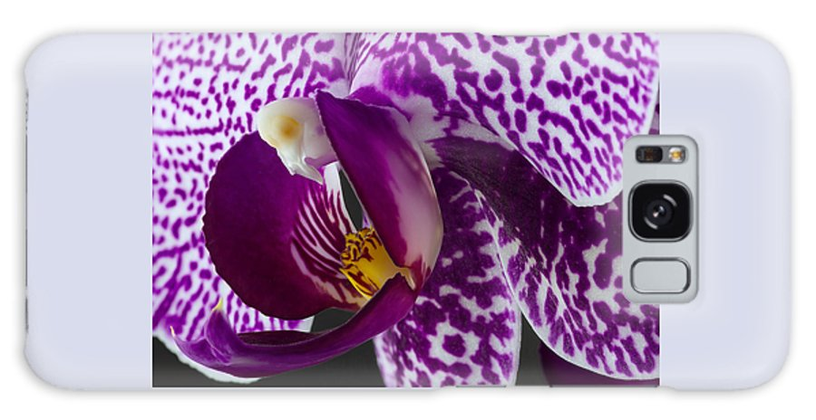 Flower Galaxy S8 Case featuring the photograph Orchid by Thomas Morris