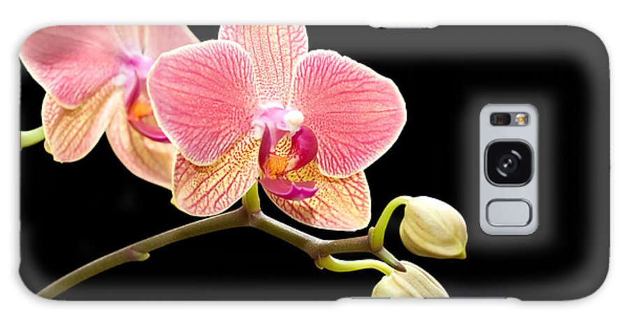 Orchid Galaxy S8 Case featuring the photograph Orchids by Gabriela Insuratelu