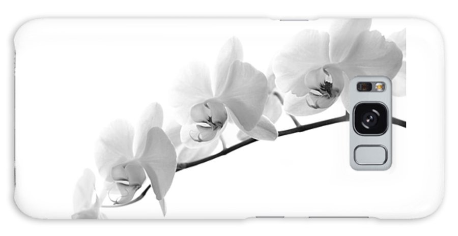 Flower Galaxy S8 Case featuring the photograph Orchids by Thomas Morris