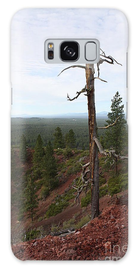 Oregon Landscape Galaxy S8 Case featuring the photograph Oregon Landscape - Confused Tree At Lava Butte by Carol Groenen