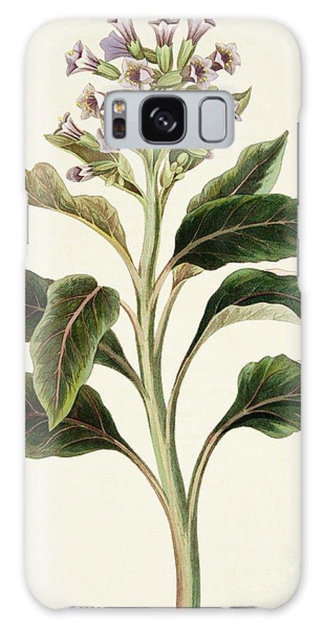 Vintage Botanical Print Galaxy S8 Case featuring the drawing Oriental Hyoscyamus by Margaret Roscoe