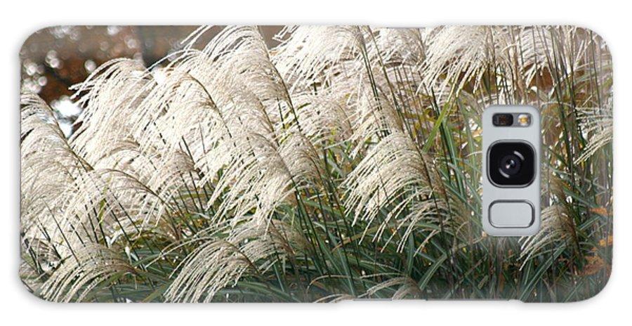 Ornamental Grass Galaxy S8 Case featuring the photograph Ornamental Grass by Diane Merkle