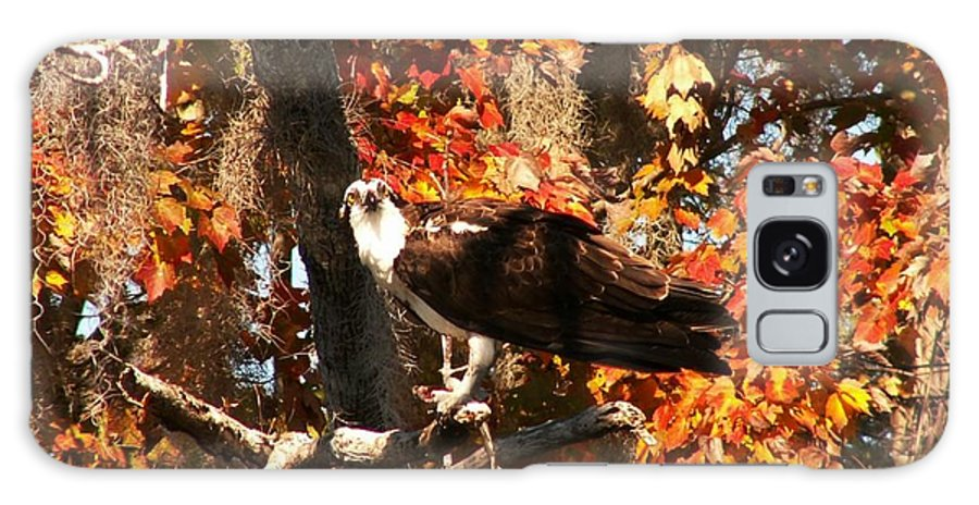 Osprey Galaxy S8 Case featuring the photograph Osprey In Fall by Theresa Willingham